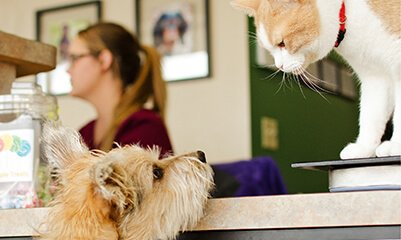 Behavioral Consultations at Walnut Creek Veterinary Clinic