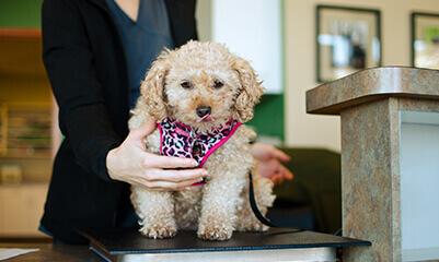 Wellness screenings for your pet at Walnut Creek Veterinary Clinic