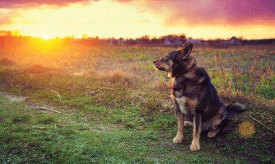 Euthanasia and Cremation Services at Walnut Creek Veterinary Clinic